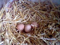 Eiernest©Grundschule Nendorf